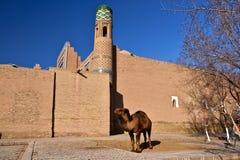 Uzbekistan. Travel through historical places in Uzbekistan royalty free stock image