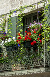Uzes (France). Uzes (Gard, Languedoc-Roussillon, France) - Old typical house with flowers Stock Images