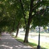 Uzhgorod - Linden Alley Imagem de Stock