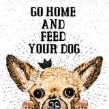 Vá em casa e alimente seu cão Imagem de Stock Royalty Free