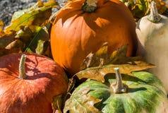 Vária abóbora com as folhas de outono na superfície da pedra Acima da vista Fotos de Stock