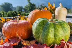 Vária abóbora com as folhas de outono na superfície da pedra Front View Imagens de Stock Royalty Free
