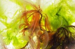 Vária alga na água - macro fotografia de stock royalty free