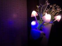 Vária cor de iluminação da flor do cogumelo da lâmpada da noite Cerco escuro Copie o espaço imagens de stock royalty free