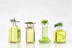 Vária garrafa de óleos essenciais e essências de plantas frescas foto de stock