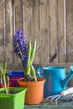 A vária mola floresce em uns potenciômetros coloridos e em um equipamento de jardinagem Imagens de Stock