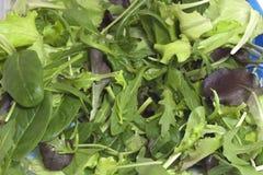 Vária salada sazonal embalada Imagens de Stock