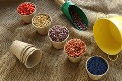 Vária semente da sementeira Imagens de Stock
