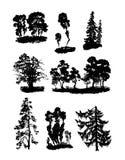 Várias árvores do vetor ilustração stock