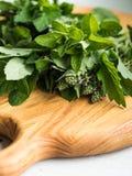 Várias ervas frescas para o chá em uma placa de madeira Fotografia de Stock