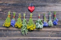 Várias ervas médicas na parede de madeira velha da exploração agrícola Fotografia de Stock Royalty Free