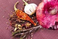 Várias especiarias e ervas, cebola e garlik Foto de Stock Royalty Free