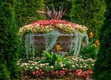 Várias flores coloridas fotografia de stock royalty free