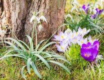 Várias flores da mola em um tronco de árvore Fotografia de Stock