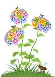 Várias flores do verão Imagem de Stock