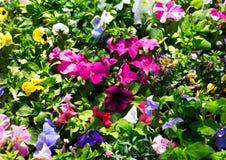 Várias flores do verão foto de stock