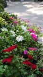 Várias flores em um jardim fotografia de stock royalty free