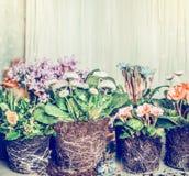 Várias flores para plantar no jardim ou nos potenciômetros Fotografia de Stock Royalty Free