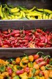 Várias pimentas quentes Imagens de Stock Royalty Free