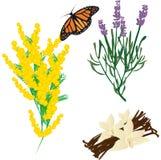 Várias plantas Imagem de Stock Royalty Free