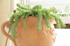 Várias plantas carnudas, coloridas imagens de stock