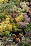 Várias plantas carnudas coloridas impressionantes no jardim fotografia de stock royalty free