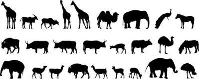 Várias silhuetas dos animais Foto de Stock Royalty Free