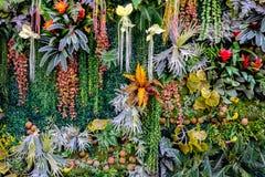Vário colorido do plástico planta a parede Fotos de Stock Royalty Free
