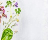 Vário da mola ou as flores e as plantas do verão no fundo de madeira claro, vista superior imagem de stock