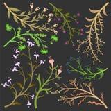 Vário projeto da flor ilustração royalty free