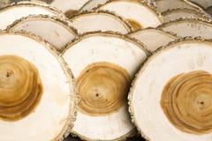 Vário seção transversal do coto de árvore Imagem de Stock