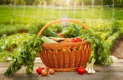 Vário vegetal na cesta e na tabela de madeira Fotos de Stock