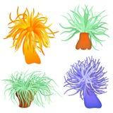 Vários anemones de mar Imagens de Stock Royalty Free