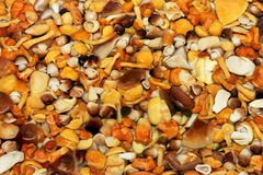 Vários cogumelos Imagens de Stock
