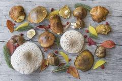 Vários cogumelos e folhas de outono na tabela de madeira velha Imagens de Stock