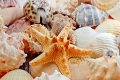 Vários escudos do mar Fotos de Stock Royalty Free