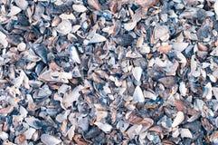 Vários escudos pequenos do mar Fotografia de Stock