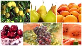 Vários frutos e colagem das árvores de fruto video estoque