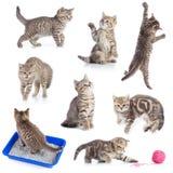 Vários gatos engraçados ajustados isolados Fotografia de Stock Royalty Free