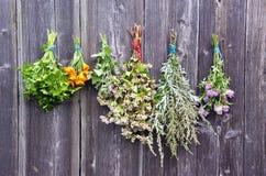 Vários grupos médicos das ervas na parede de madeira velha Imagens de Stock