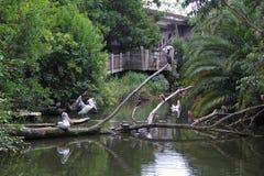 Vários pássaros no lago imagem de stock royalty free