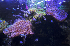 Vários peixes em um habitat fluorescente imagens de stock royalty free