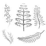 Vários ramos tirados no lápis e no carvão vegetal Imagens de Stock