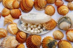 Vários seashells Fotografia de Stock Royalty Free