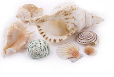 Vários seashells Imagens de Stock Royalty Free