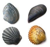Vários shell do mar no fundo branco fotografia de stock