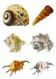 Vários shell do mar no fundo branco Imagens de Stock