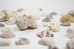 Vários shell isolados no baixo ângulo branco Fotografia de Stock