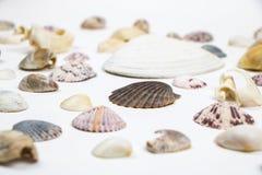 Vários shell isolados no baixo ângulo branco Fotos de Stock Royalty Free