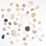 Vários shell isolados no branco Imagens de Stock Royalty Free